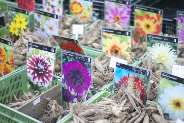 botanischergarten14