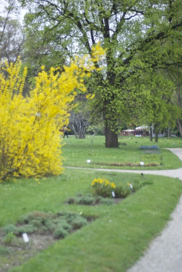 botanischergarten18