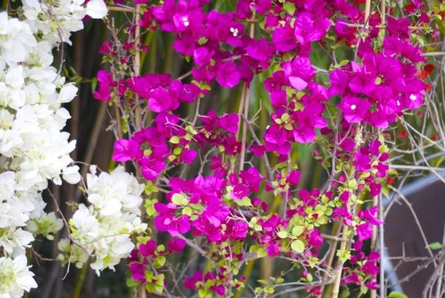 botanischergarten22