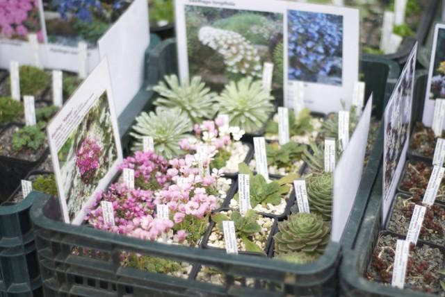 botanischergarten23