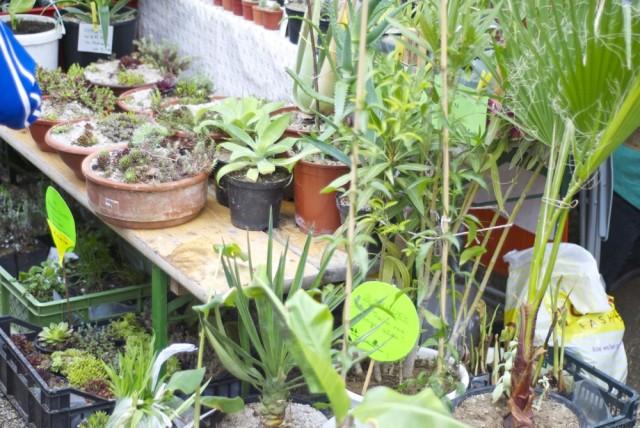 botanischergarten27